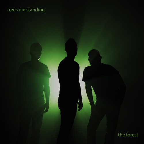 forest trees die standing