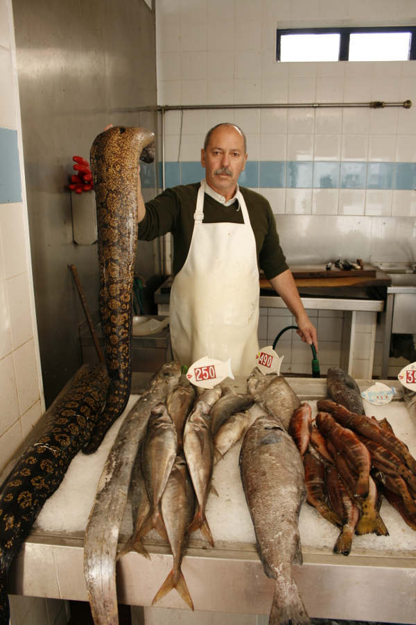 azores terceira portugal viaje turismo islas vacaciones atlantico mercado abastos pescado