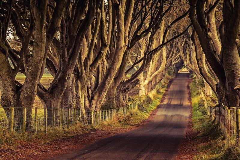 juego de tronos irlanda del norte Dark Hedges